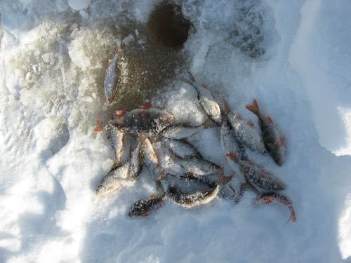 прикормка для чебака зимой манка